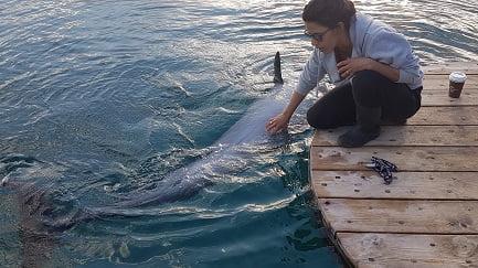 אילת ריף הדולפינים