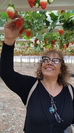 קטיף תותים - גובה תאילנדי :)